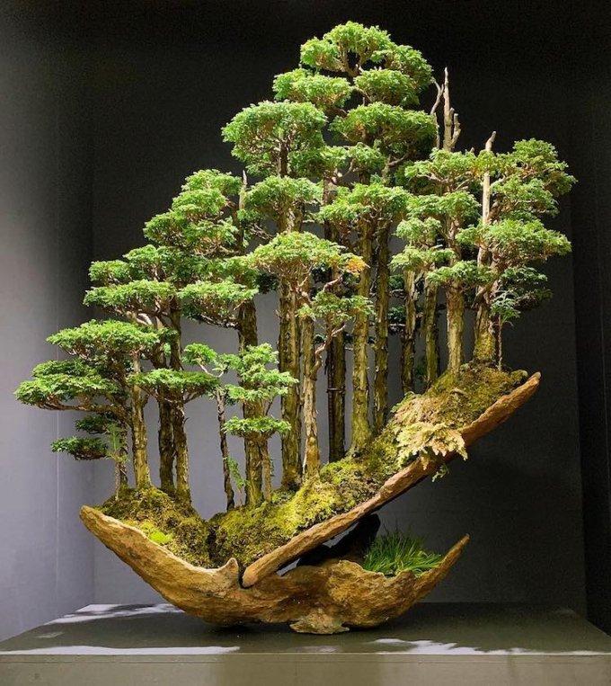 Bonsai by Masahiko Kimura